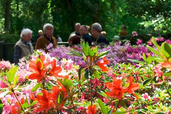 Spaziergänger während der Hauptblüte im Bremer Rhododendronpark