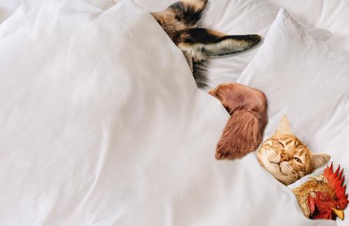 Stadtmusikanten Bremen Tiere im Bett